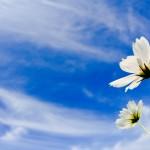 「うつ」の不安を忘れる4つの秘策